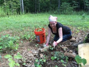 Laura weeds out some saplings from the site